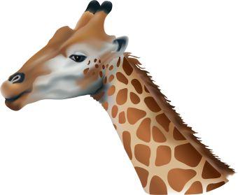 Clip art of a tall African giraffe.