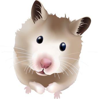 Clip art of a fuzzy teddy bear hamster.