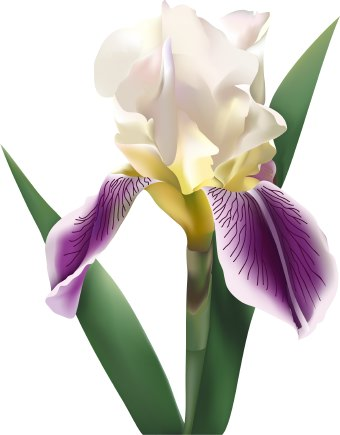 Iris Flower on Iris Flower Clip Art