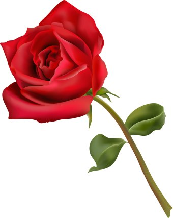 Clip art of a red rose flower with green leaves.