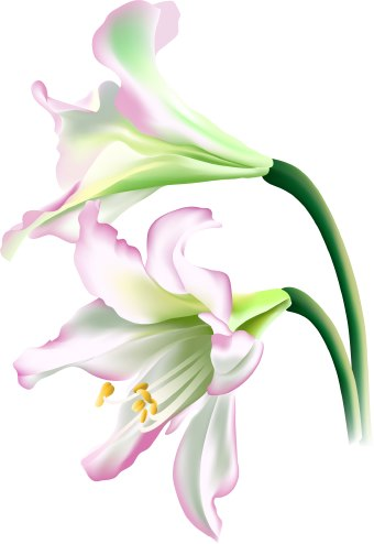free clip art lily flowers - photo #1