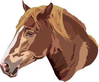 Horse head clip art ar - photo#7