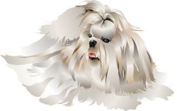 Long-haired Dog clip art