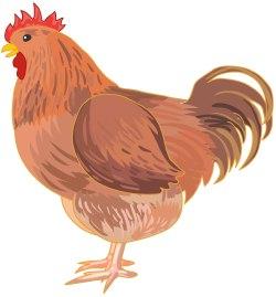 Chicken Free Vector Art  1907 Free Downloads